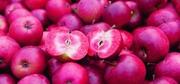 Красномякотные яблони